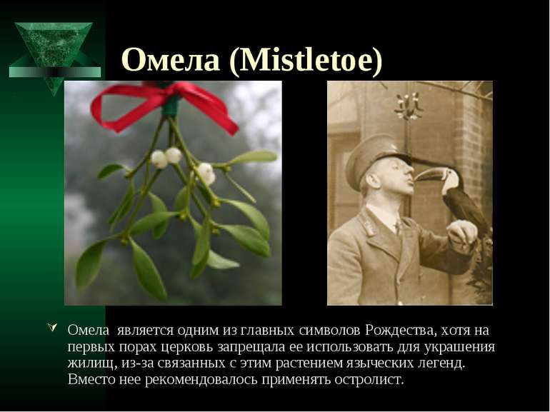 Омела (Mistletoe) Омела является одним из главных символов Рождества, хотя на...