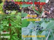 Бузина Вовчі ягоди Крушина ламка Ягоди конвалії Неїстівні ягоди