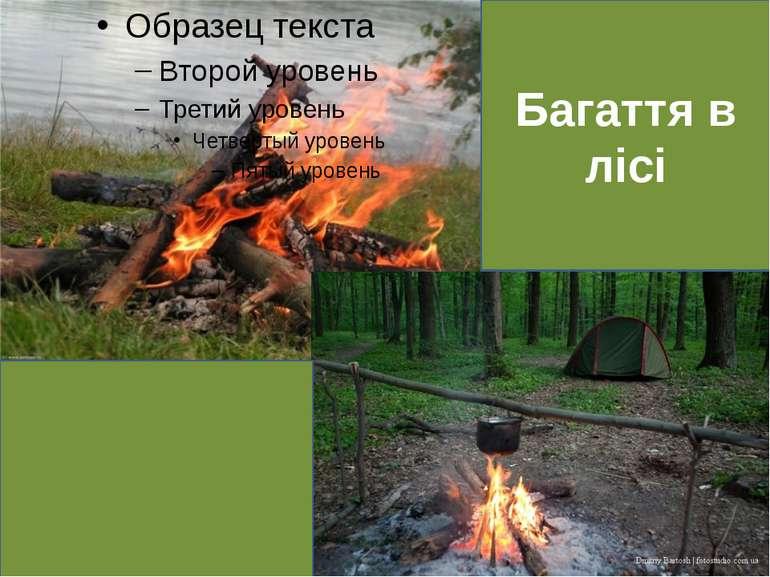 Багаття в лісі