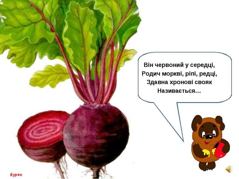 Він червоний у середці, Родич моркві, ріпі, редці, Здавна хронові свояк Назив...