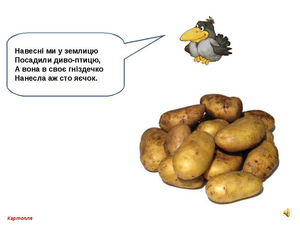 Картопля Навесні ми у землицю Посадили диво-птицю, А вона в своє гніздечко На...