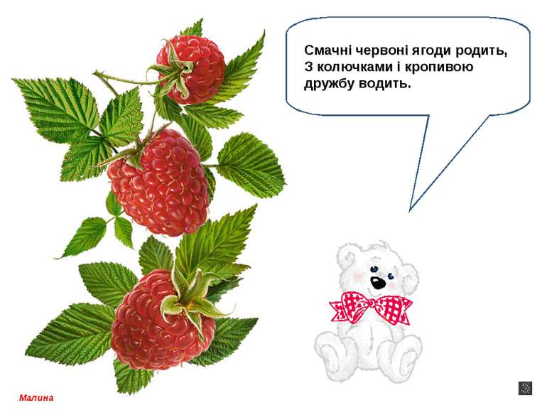 Малина Смачні червоні ягоди родить, З колючками і кропивою дружбу водить.