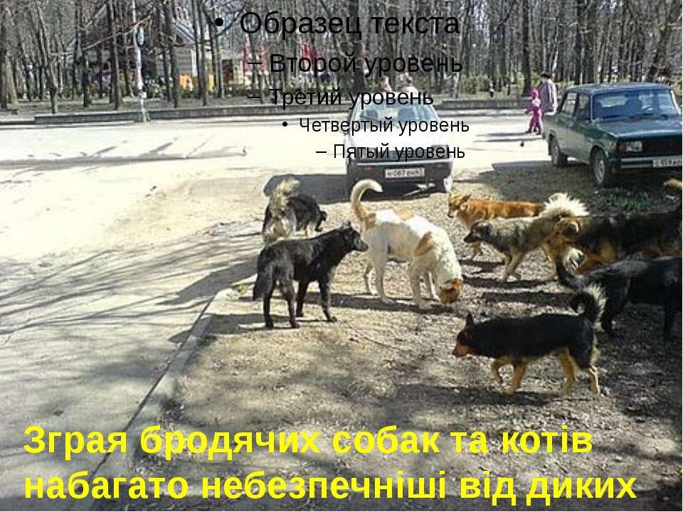 Зграя бродячих собак та котів набагато небезпечніші від диких тварин.