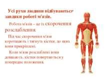 Усі рухи людини відбуваються завдяки роботі м'язів. Робота м'язів – це їх ско...
