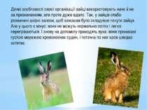 Деякі особливості своєї організації зайці використовують наче й не за признач...