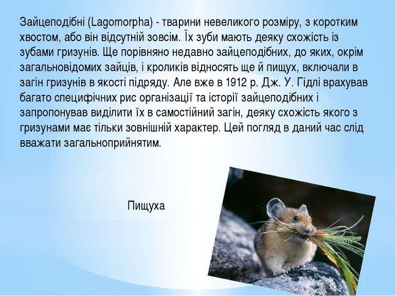 Зайцеподібні (Lagomorpha) - тварини невеликого розміру, з коротким хвостом, а...