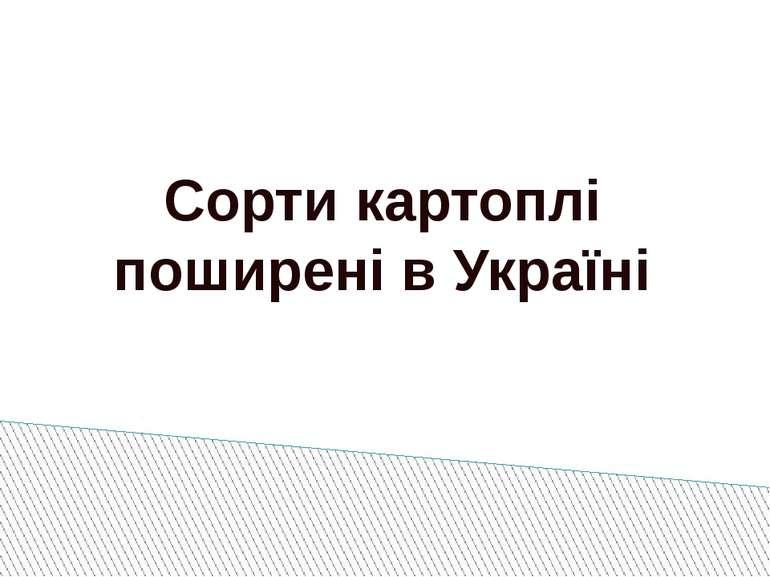Сорти картоплі поширені в Україні