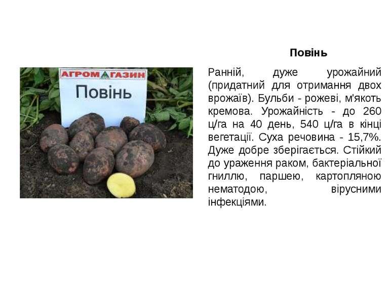 Повінь Ранній, дуже урожайний (придатний для отримання двох врожаїв). Бульби ...
