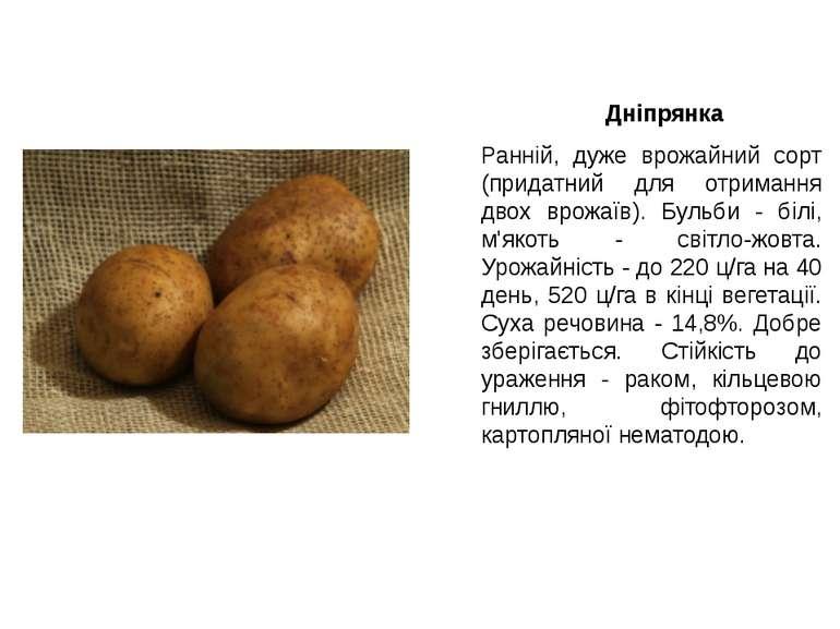 Дніпрянка Ранній, дуже врожайний сорт (придатний для отримання двох врожаїв)....