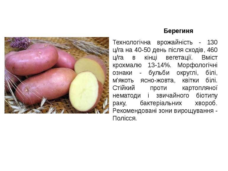 Берегиня Технологічна врожайність - 130 ц/га на 40-50 день після сходів, 460 ...