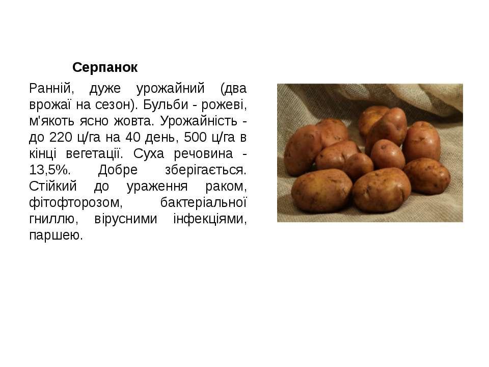 Серпанок Ранній, дуже урожайний (два врожаї на сезон). Бульби - рожеві, м'яко...