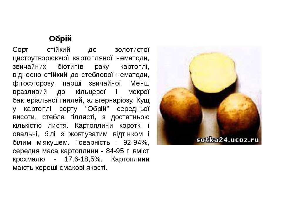 Обрій Сорт стійкий до золотистої цистоутворюючої картопляної нематоди, звичай...