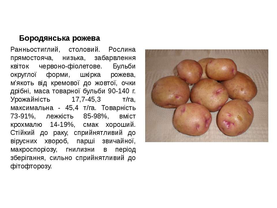 Бородянська рожева Ранньостиглий, столовий. Рослина прямостояча, низька, заба...