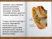 Зовнішнє вухо утворене вушною раковиною і зовнішнім слуховим проходом. Зовніш...