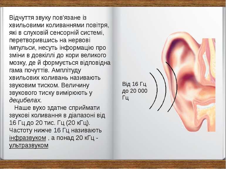 Відчуття звуку пов'язане із хвильовими коливаннями повітря, які в слуховій се...