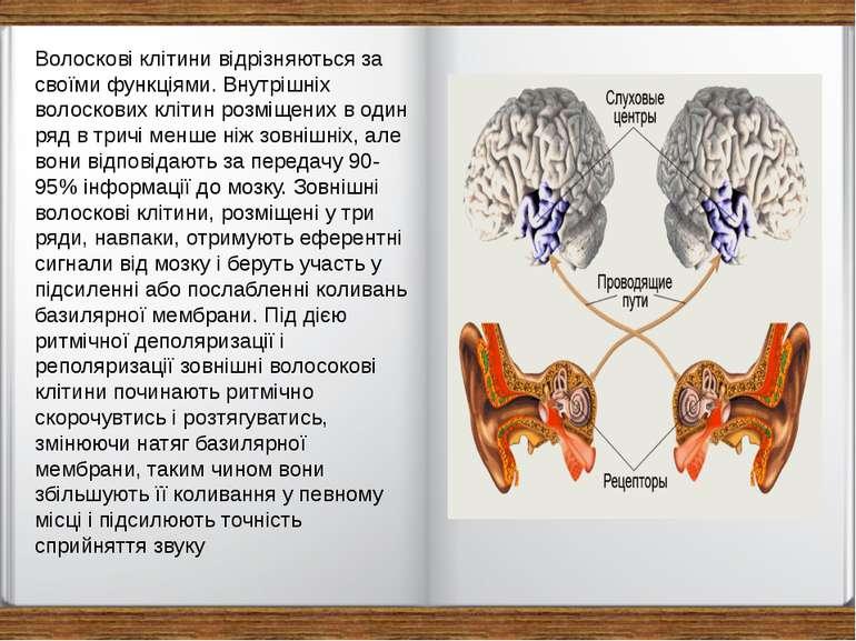 Волоскові клітини відрізняються за своїми функціями. Внутрішніх волоскових кл...