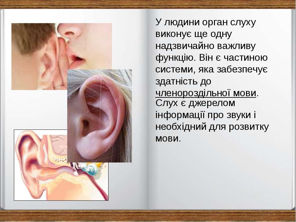 У людини орган слуху виконує ще одну надзвичайно важливу функцію. Він є части...