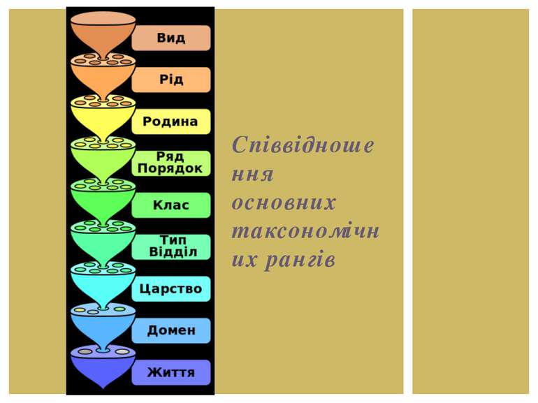 Співвідношення основних таксономічних рангів