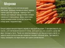 Морква Дворічна трав'яниста рослина родини зонтичних. Щоденне вживання свіжої...
