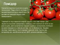 Помідор Однорічна трав'яниста рослина родини пасльонових. Томати багаті на ві...