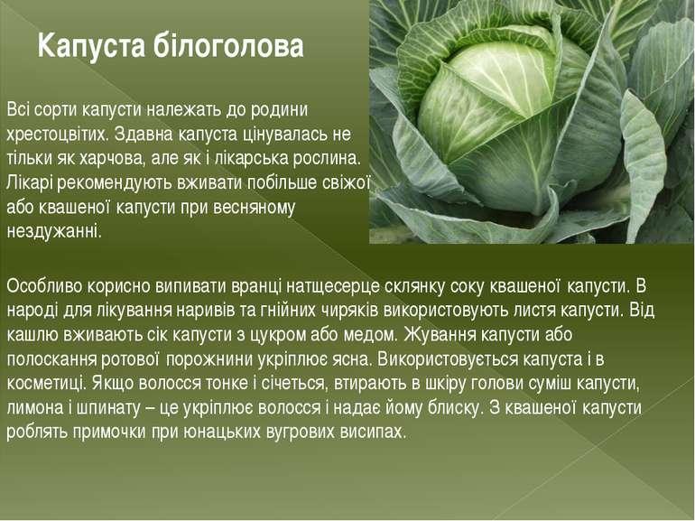 Капуста білоголова Всі сорти капусти належать до родини хрестоцвітих. Здавна ...