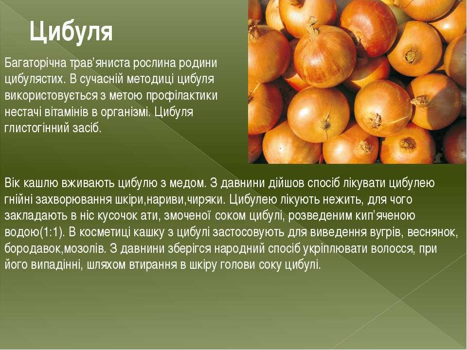 Цибуля Багаторічна трав'яниста рослина родини цибулястих. В сучасній методиці...