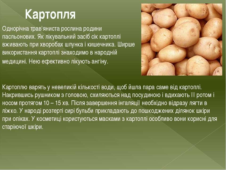 Картопля Однорічна трав'яниста рослина родини пасльонових. Як лікувальний зас...