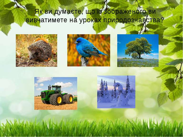 Як ви думаєте, що із зображеного ви вивчатимете на уроках природознавства?