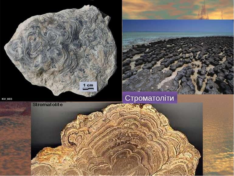 Строматоліти