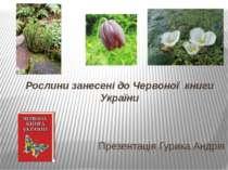 Рослини занесені до Червоної книги України Презентація Гурика Андрія