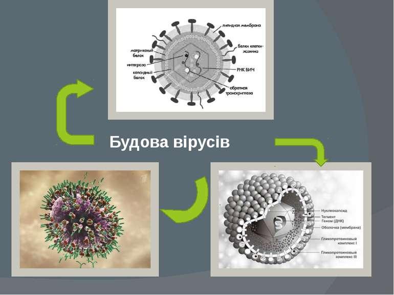 Будова вірусів
