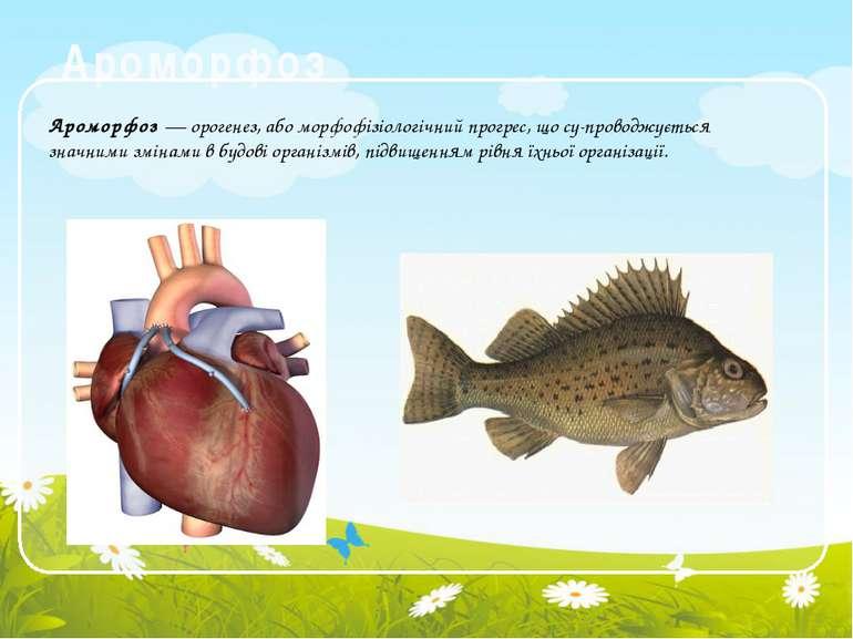 Ароморфоз Ароморфоз — орогенез, або морфофізіологічний прогрес, що су проводж...