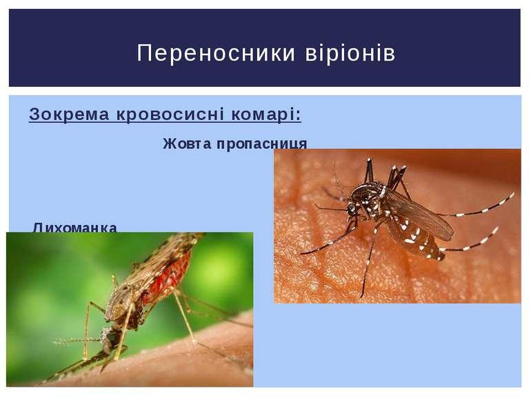 Зокрема кровосисні комарі: Жовта пропасниця Лихоманка Західного Нілу Переносн...