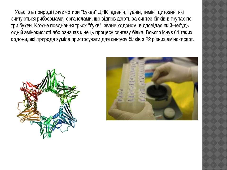 """Усього в природі існує чотири """"букви"""" ДНК: аденін, гуанін, тимін і цитозин, я..."""