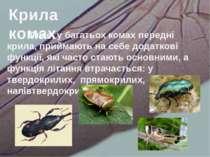 Отже, у багатьох комах передні крила, приймають на себе додаткові функції, як...