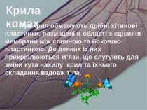 Рух крил обмежують дрібні хітинові пластинки, розміщені в області з'єднання м...