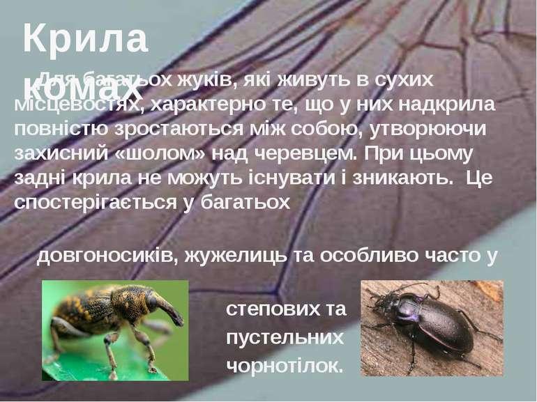 Для багатьох жуків, які живуть в сухих місцевостях, характерно те, що у них н...