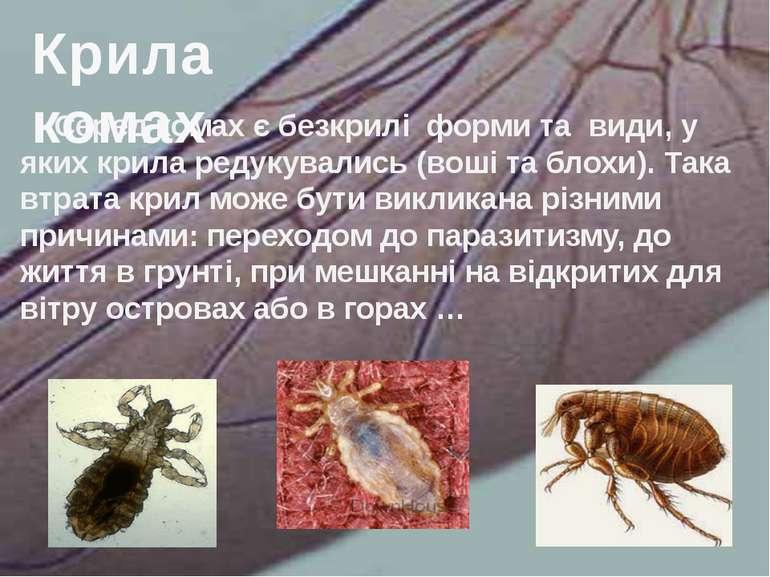 Серед комах є безкрилі форми та види, у яких крила редукувались (воші та блох...
