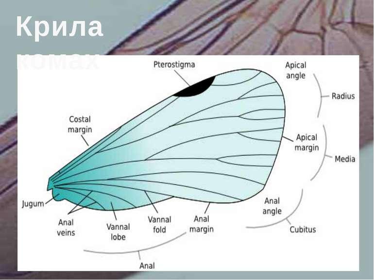 Крила комах