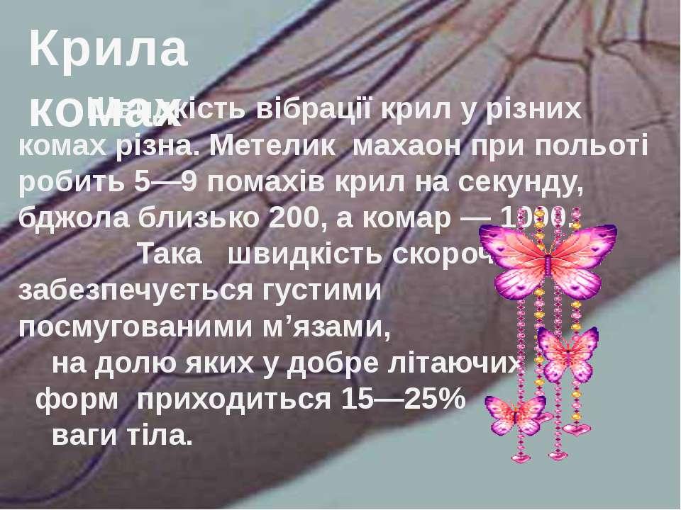 Швидкість вібрації крил у різних комах різна. Метелик махаон при польоті роби...