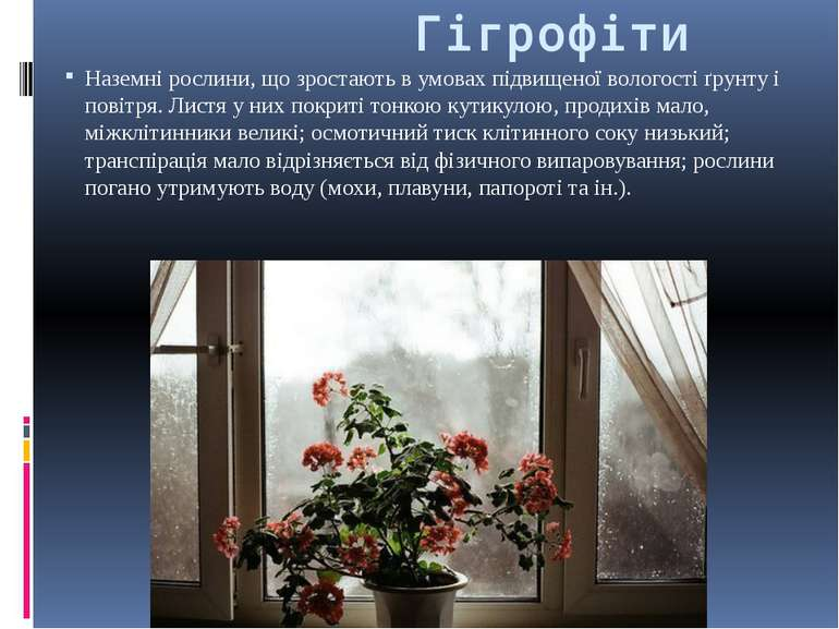 Гігрофіти Наземні рослини, що зростають в умовах підвищеної вологості ґрунту ...