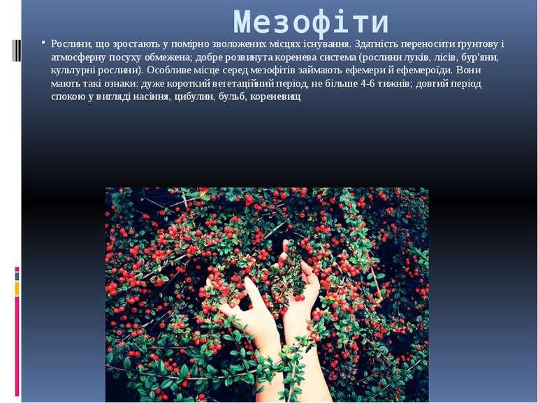 Мезофіти Рослини, що зростають у помірно зволожених місцях існування. Здатніс...