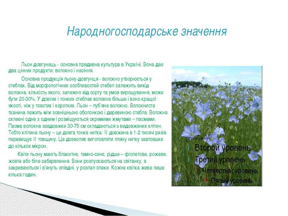 Народногосподарське значення Льон довгунець - основна прядивна культура в Укр...
