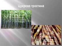 Цукрова тростина