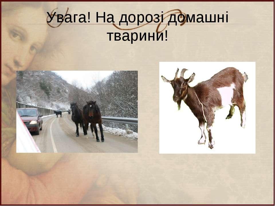 Увага! На дорозі домашні тварини!