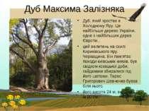 Дуб Максима Залізняка Дуб, який зростає в Холодному Яру. Це найбільше дерево ...