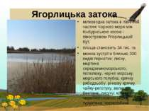 Ягорлицька затока мілководна затока в північній частині Чорного моря між Кінб...