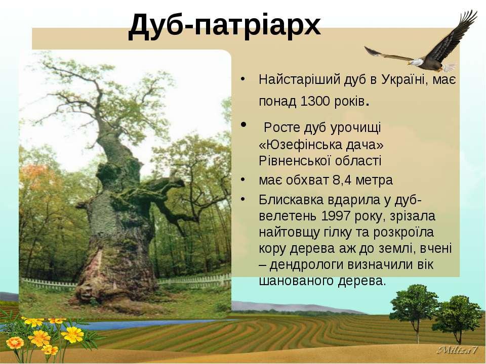 Дуб-патріарх Найстаріший дуб в Україні, має понад 1300 років. Росте дуб урочи...