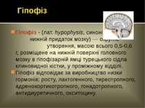 Гіпофіз - (лат. hypophysis, синонім - нижній придаток мозку) — округле утворе...