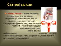 Статеві залози – яєчка (чоловічі), яєчники (жіночі) є залозами подвійної дії,...